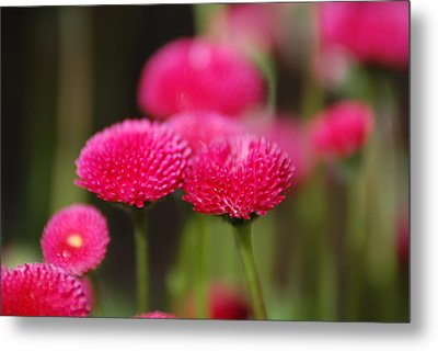 Metal Print featuring the photograph Spring Flowers by Ron Roberts
