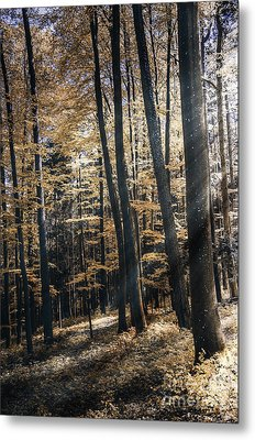 Metal Print featuring the photograph Spring Forest by Bruno Santoro