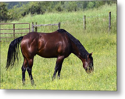 Spring Grazing Metal Print by Susan Leggett