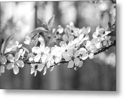 Spring Has Sprung Metal Print by Barbara Bardzik
