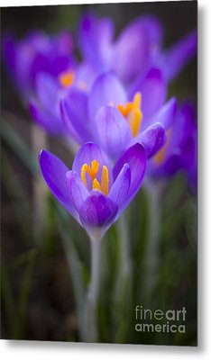 Spring Has Sprung Metal Print by Clare Bambers