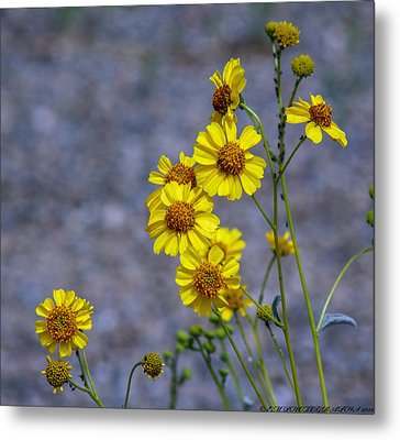 Metal Print featuring the photograph Spring Has Sprung by Elaine Malott