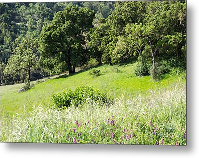 Spring Hike Metal Print by Suzanne Luft