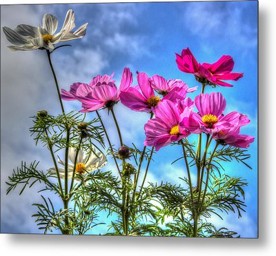 Spring In Full Swing Metal Print by Heidi Smith