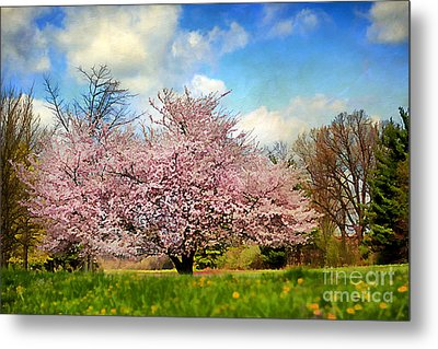 Spring In Kentucky Metal Print by Darren Fisher