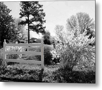 Spring In Martinsville Bw Metal Print by Angelia Hodges Clay