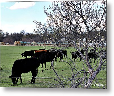 Spring In The Hay Meadow Metal Print