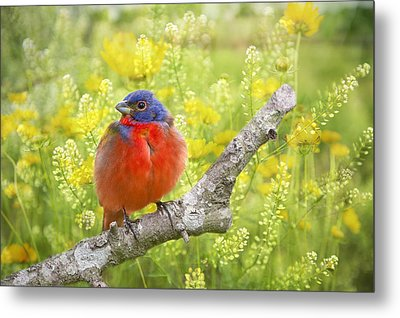 Spring Is A New Beginning Metal Print by Bonnie Barry