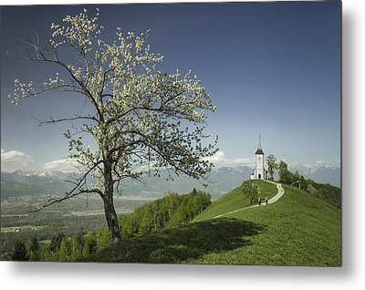 Spring Is Back Metal Print by Robert Krajnc