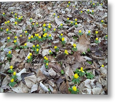 Metal Print featuring the photograph Spring Is Coming by Eric Switzer