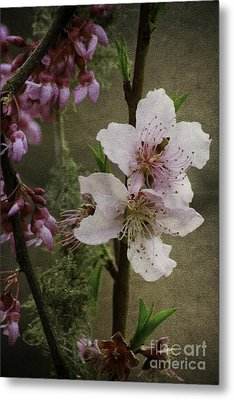 Metal Print featuring the photograph Spring Is Here by Lori Mellen-Pagliaro