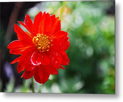 Spring Is In The Air Metal Print by Becky Furgason