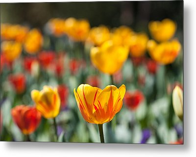 Spring Is Upon Us Metal Print