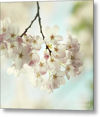 Metal Print featuring the photograph Spring Light by Sylvia Cook