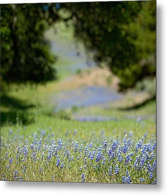 Spring Lupines Metal Print by Art Block Collections