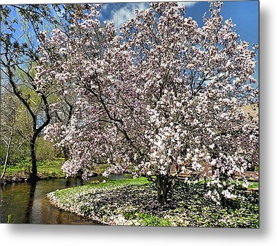 Metal Print featuring the photograph Spring Magnolia by Janice Drew