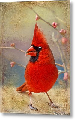 Spring Male Norther Cardinal Metal Print