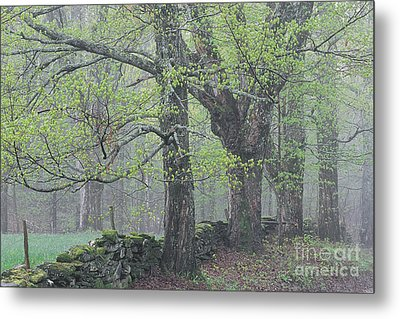 Metal Print featuring the photograph Spring Mist by Alan L Graham