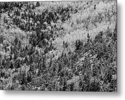 Spring On Cadillac Mountain Acadia National Park Black And White Metal Print by Keith Webber Jr