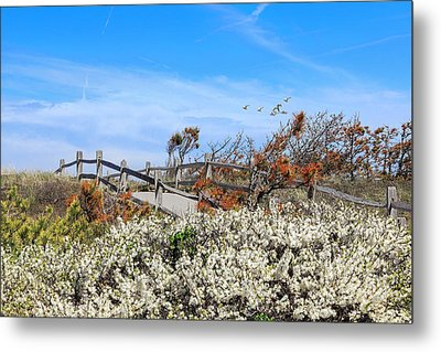 Spring On Cape Cod Metal Print by Bill Wakeley