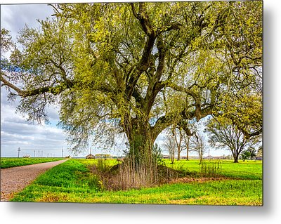 Spring On The Delta Metal Print by Steve Harrington