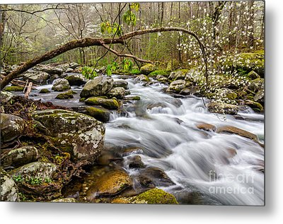 Dogwood Bend Metal Print by Anthony Heflin