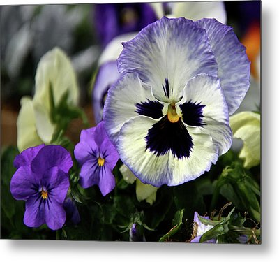 Spring Pansy Flower Metal Print by Ed  Riche
