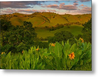 Spring Scene At Round Valley Metal Print by Marc Crumpler