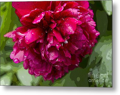 Spring Shower Peony 2 Metal Print by Jeanette French