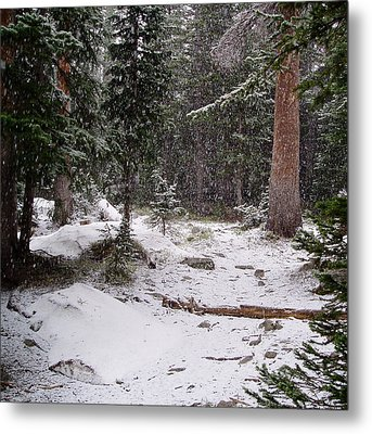 Spring Snow Shower Metal Print