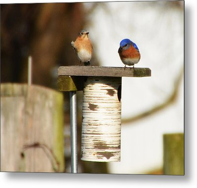 Spring Songbirds Metal Print by Bill Cannon