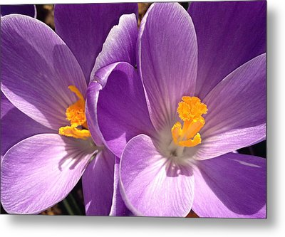 Metal Print featuring the photograph Spring Sprang by Gwyn Newcombe
