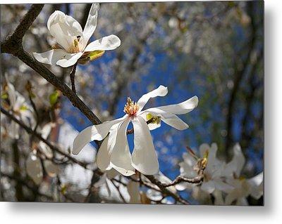 Spring Trees 1 Metal Print