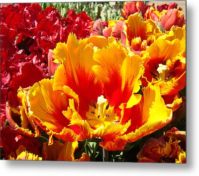 Spring Tulip Flowers Art Prints Yellow Red Tulip Metal Print by Baslee Troutman