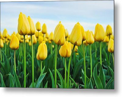 Metal Print featuring the photograph Spring Tulips by Crystal Hoeveler