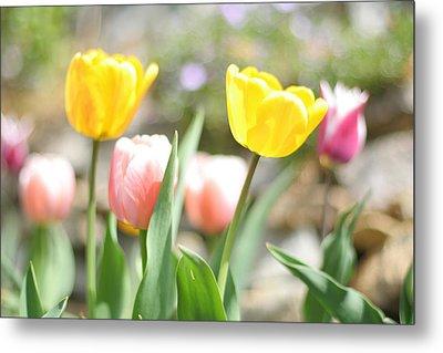 Spring Tulips Metal Print by Heidi Hermes