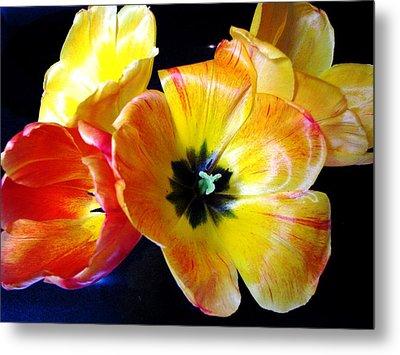 Spring Tulips Xx Metal Print by Judyann Matthews