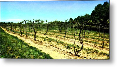 Spring Vineyard Ll Metal Print by Michelle Calkins
