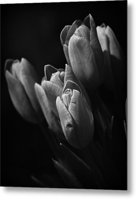 Spring Whispers Metal Print by Mary Zeman