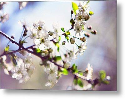 Spring White Cherry Tree  Metal Print by Jenny Rainbow
