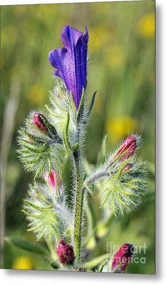 Metal Print featuring the photograph Spring Wild Flower by George Atsametakis