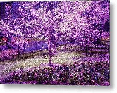 Spring Wonderland Pastel. Garden Keukenhof. Netherlands Metal Print by Jenny Rainbow