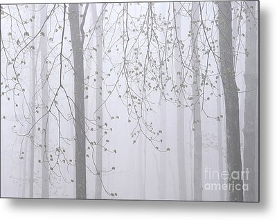 Spring Woodland Fog 2 Metal Print by Alan L Graham