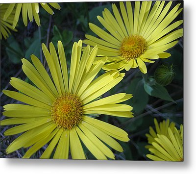Metal Print featuring the photograph Spring Yellow  by Cheryl Hoyle