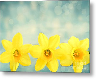 Spring Yellow Metal Print by Darren Fisher