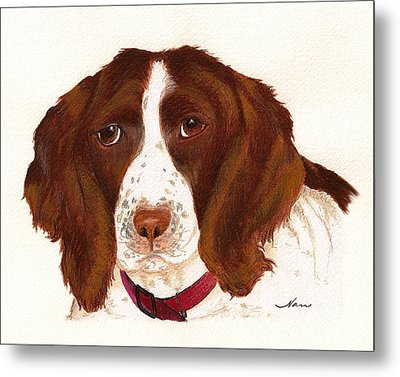 Metal Print featuring the painting Springer Spaniel  by Nan Wright
