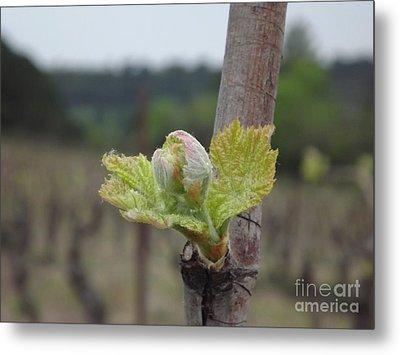 Spring In The Vineyard Metal Print by France  Art