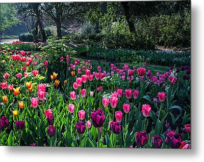 The Promise Of Spring Metal Print by Lynn Bauer