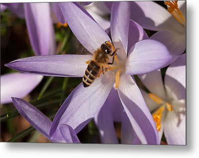 Spring's Welcome Metal Print