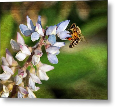 Metal Print featuring the photograph Springtime I by Dawn Currie